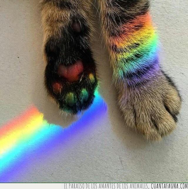 arcoíris,arte,artístico,foto,luz,pata,rayo