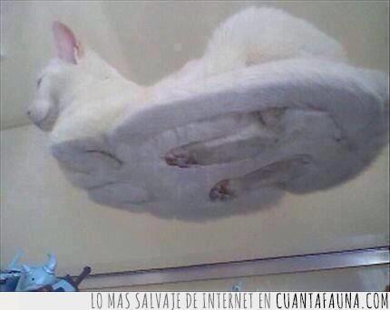 cristal,debajo,gato,geniales,mesa,patas,sentado,vistas