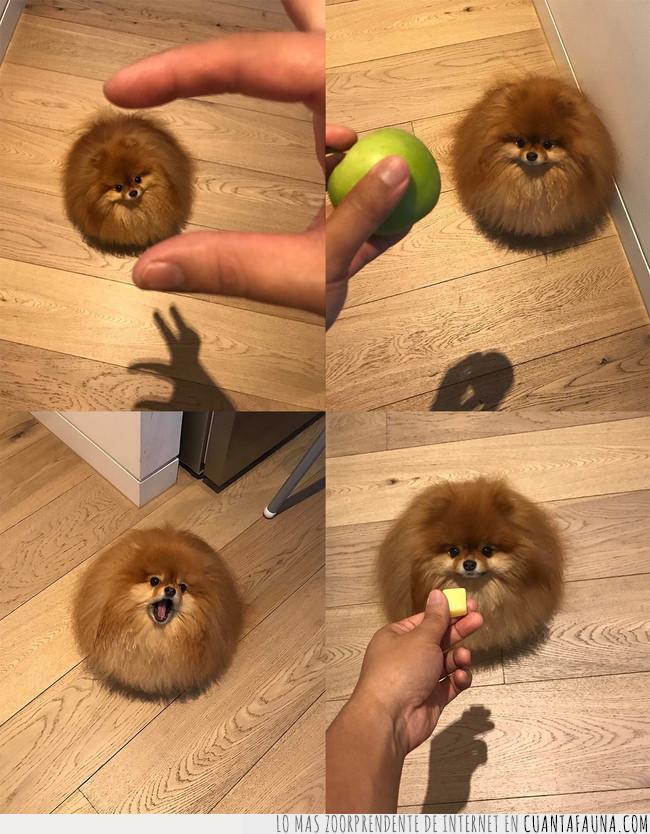 bola,cilindro,circunferencia,creer,esfera,mascota,perro,queso,redondo
