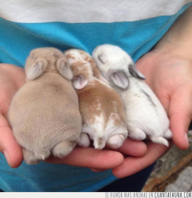 bebé,cachorros,conejos,culitos,frase,sentido,suave,tres