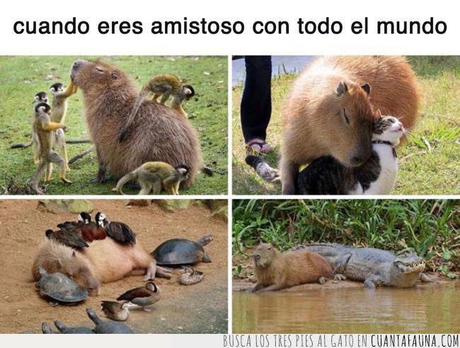 agradable,amable,amistad,amistoso,animales,capibara,naturaleza,relaciones públicas