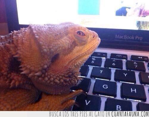 detrás,encima,leer,mac,portátil,reptil,tuyo