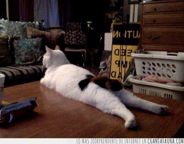 casa,cómodo,día,duro,estirar,gato,llegar,mesa,postura