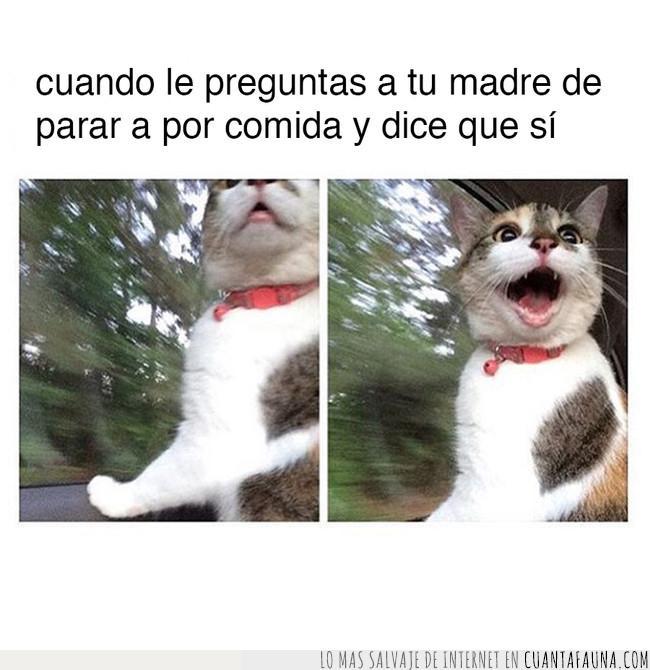 cara,comida,decir,gato,madre,meme,parar,pedir,sorpresa