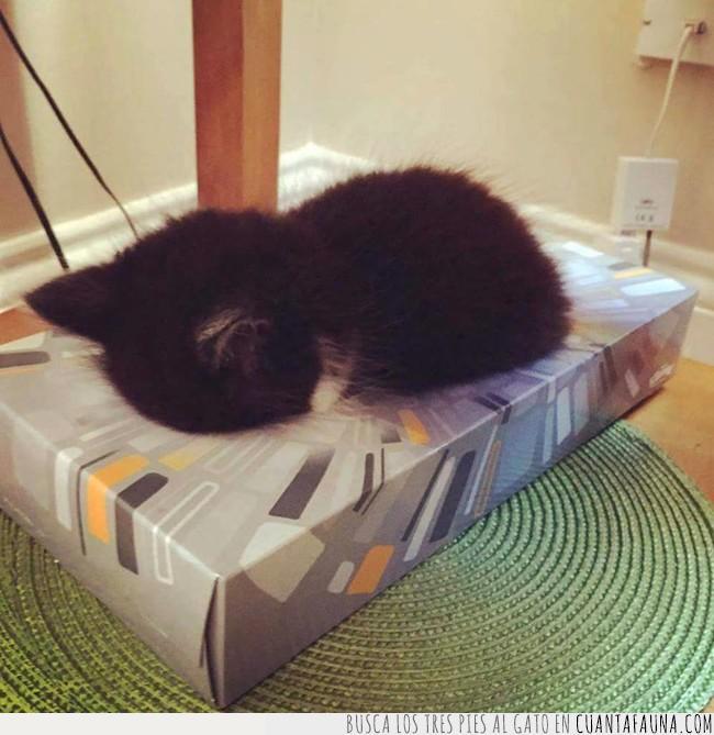 caja,dormir,gato,llorar,pañuelos,sentir,triste