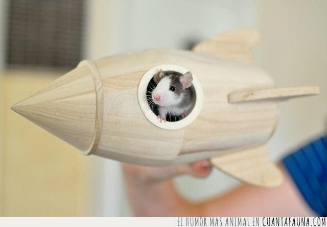 cohete,espacio,hámster,juguete,madera,miniatura,planeta,rata,ratón,roedor,volar