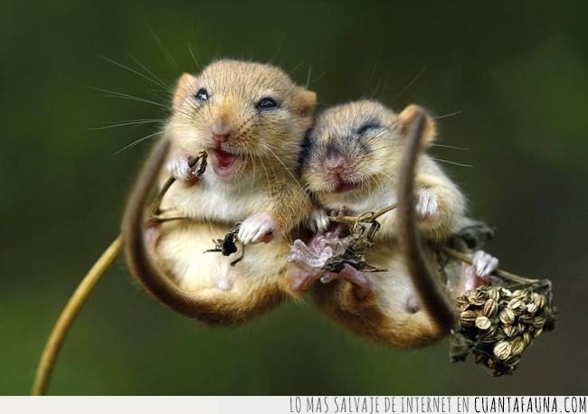 campo,fin de semana,montar,plan,ratones,sonreír