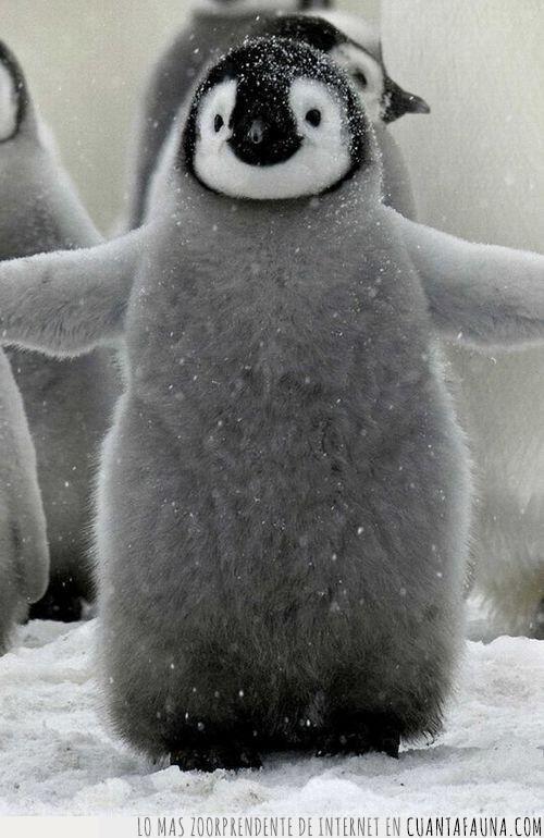 abrazar,abrazo,alas,aletas,cría,gesto,pequeño,pingüino