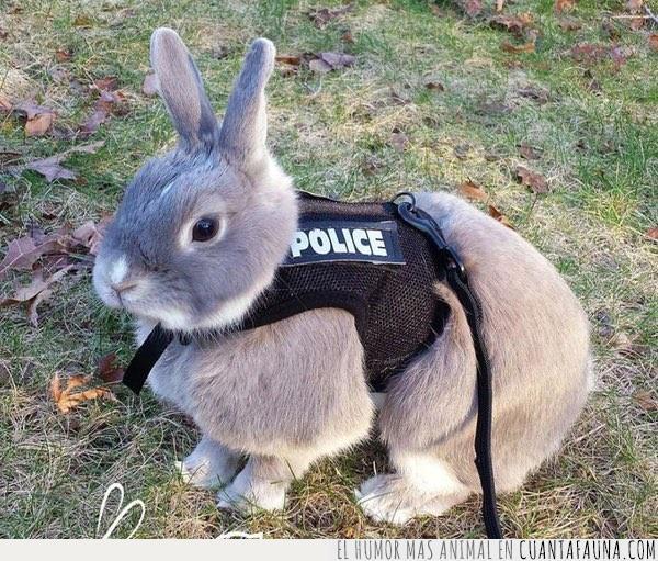 chaleco,conejo,confiar,fuerza,police,policia,seguridad