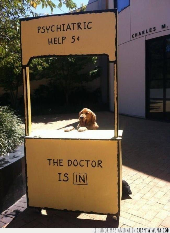 admitir,ayuda,consulta,dibujos,parada,peanuts,pedir,perro,psicológica,snoopy