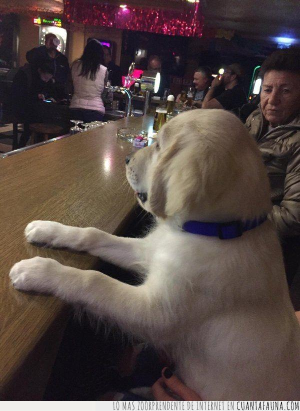 alcohol,bar,barra,beber,dura,juzgar,perro,semana