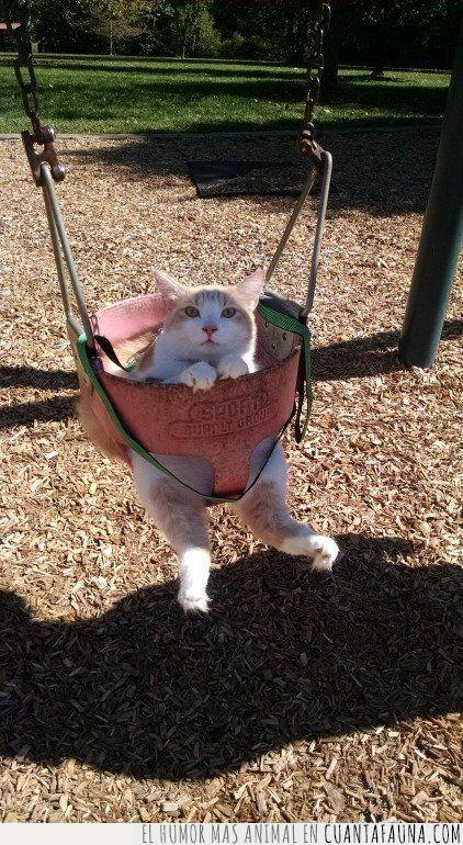 atracción,columpio,empujar,gato,infantil,parque,pedir