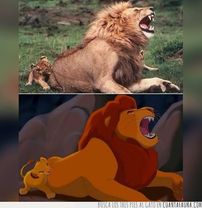 comparación,dibujos,disney,fotografía,león,real,realidad,rey,vida