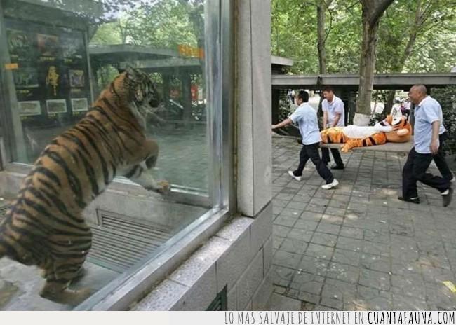 cara,compañero,evaluar,examen,jaula,muñeco,peluche,salir,sufrimiento,tigre,zoo
