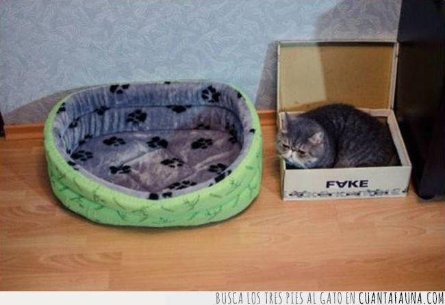 caja,cama,cartón,cojín,gato,lecho,naturaleza,preferir
