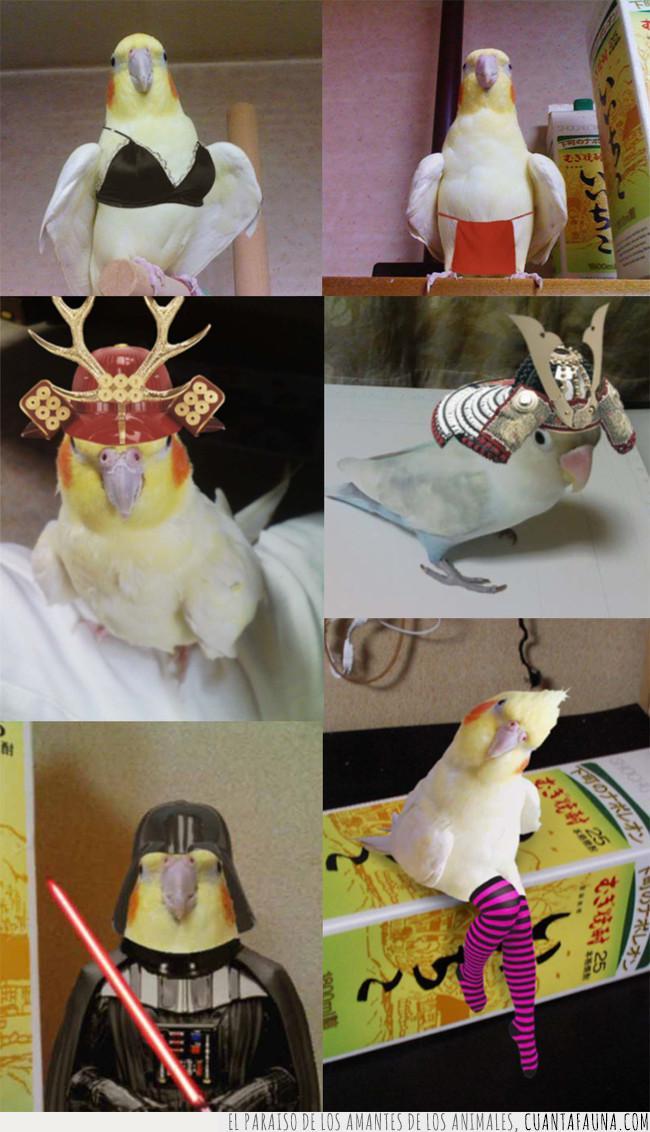 chop,convertir,disfraz,dueño,estrella,look,montaje,pájaro,transformar