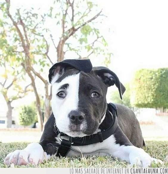 blanco,mix,negro,perro