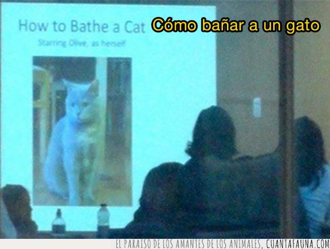 bañar,bien,conferencia,convención,experto,gato,gente,loco