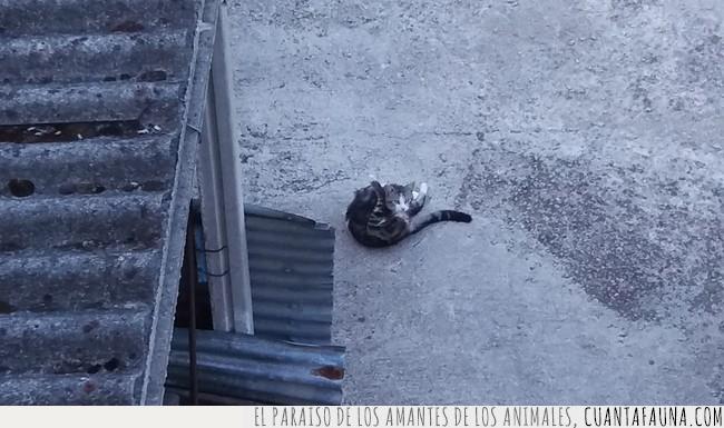 Gato,intimidad,mirada,postura