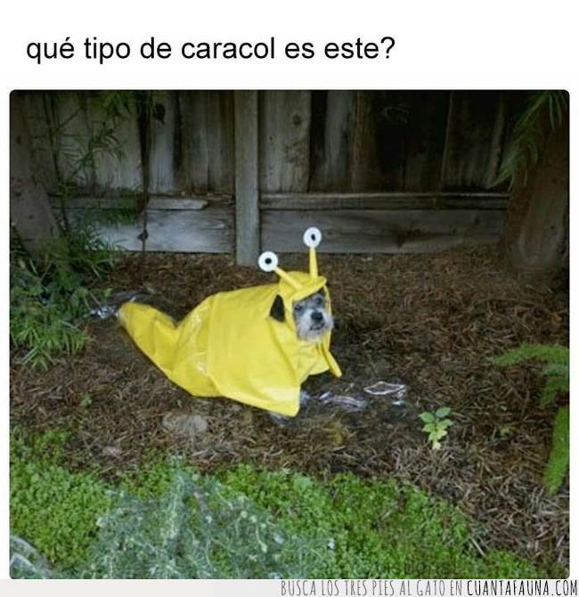 amarillo,caracol,chubasquero,lluvia,noche,perro