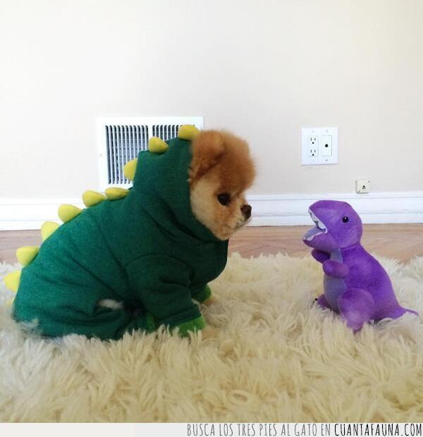 bien,dinosaurio,disfraz,juguete,lila,llevar,peluche,perro,verde