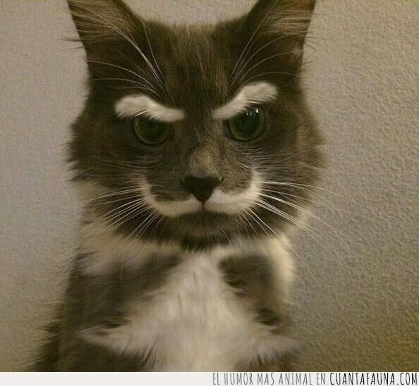 cara,ceja,gato,levantar,meme,pregunta,seriedad,serio