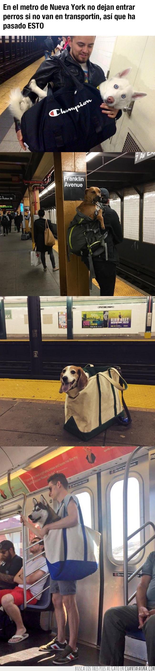 america,bolsas,bolsos,ciudad,dueños,ley,maletas,metro,normativa,nueva york,perros,público,transporte,transportín