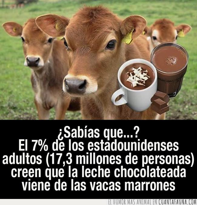 cantidad,chocolate,creer,leche,marrones,millones,población,porcentaje,producir,vacas,venir