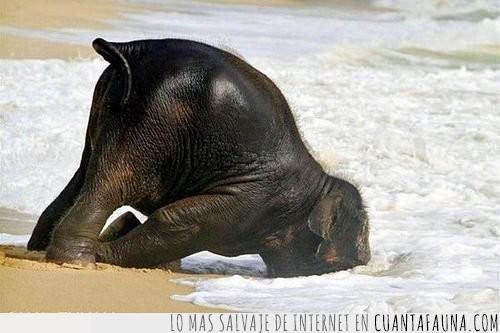 agua,cachorro,cría,día,elefante,morro,ola,playa,primer,trompa