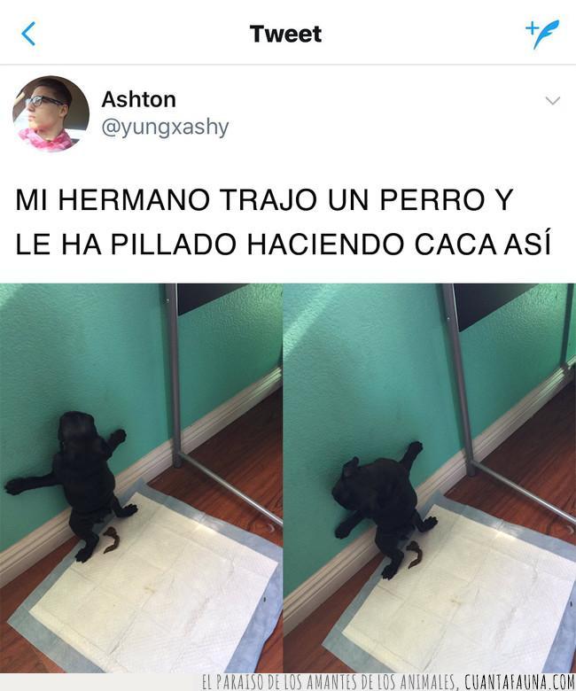 alfombra,atrás,caca,cachorro,costumbre,negro,patas,perro,pie,servilleta,sorprender,sostener,suelo