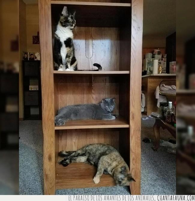 comprar,convertir,estantería,estantes,gatos,librería,libros,mueble