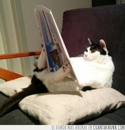 actualidad,casa,coger,cojín,día,diario,gato,leer,patas,relax