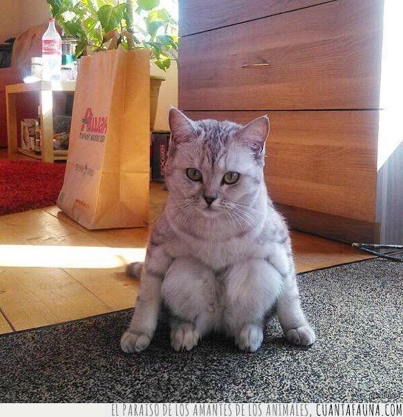 andar,gato,humano,parecer,patas,postura,raro,sentar