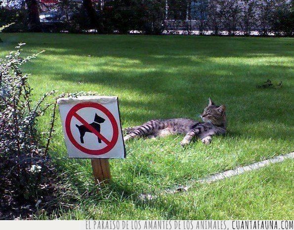 animales,césped,confusión,gato,perro,rebelde,señal