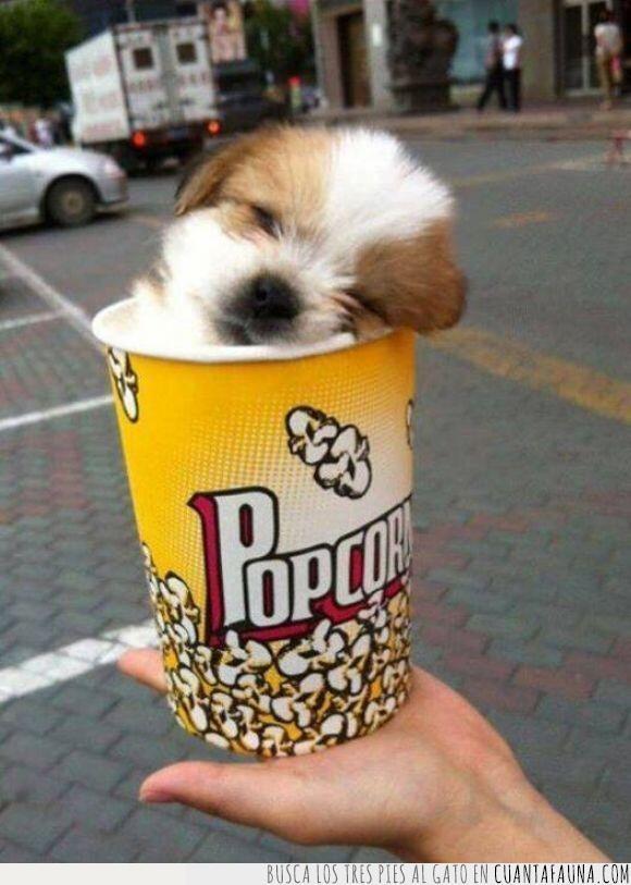 cachorro,cine,colar,cubo,dentro,palomitas,pequeño,perro