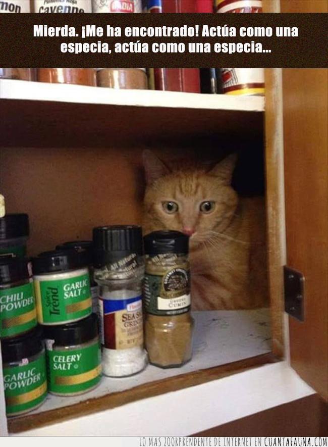 armario,camuflar,dominio,encontrar,esconder,especias,gato,pote