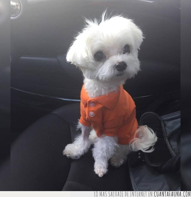 blanco,coche,copiloto,naranja,perro,polo
