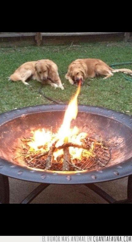 boca,chorro,Daenerys,dragones,efecto,fuego,juego de tronos,llama,perro
