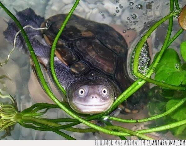 agua,estanque,foto,posar,tortuga