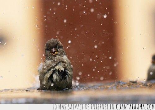 agua,apetecer,baño,ducha,feliz,gotas,pájaro,refrescar