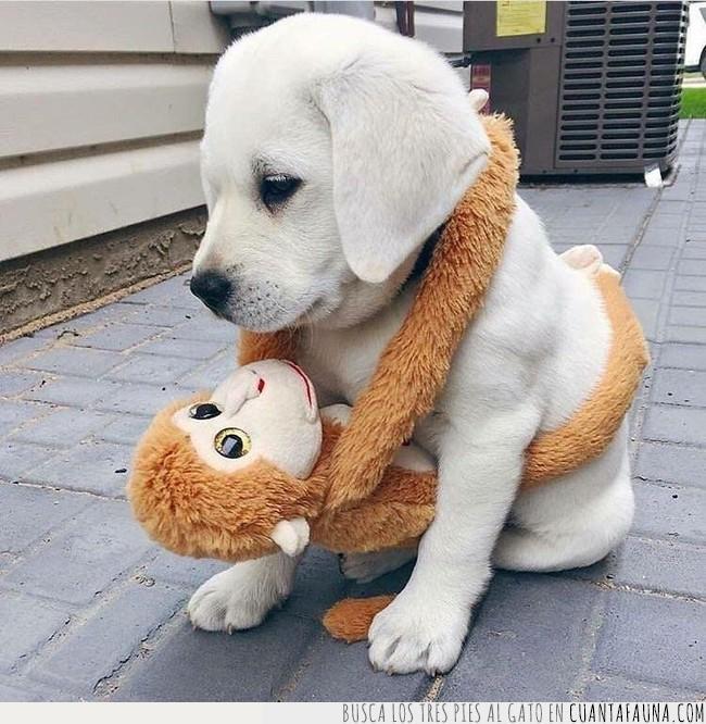 andar,cachorro,calle,cría,mono,muñeco,paseo,peluche,pequeño,perro,salir