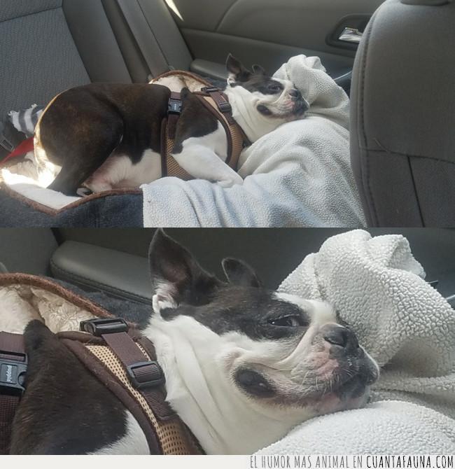 buscar,coche,fuente,mirar,pedo,perro,ruta,sonreír,trasera