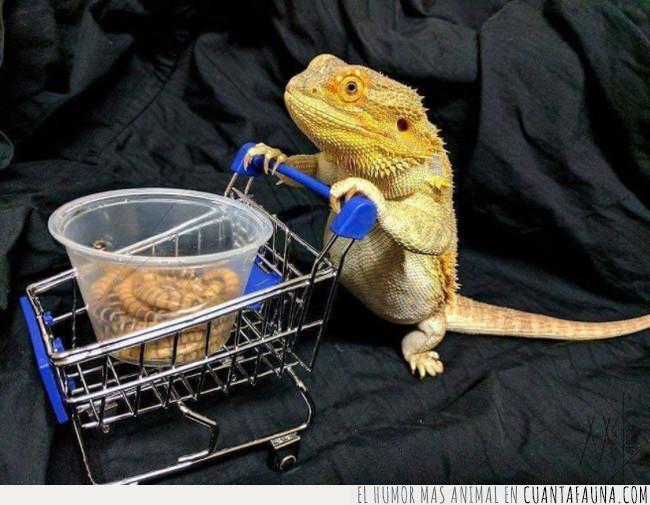 carrito,comida,compra,gusanos,insectos,reptil,sujetar