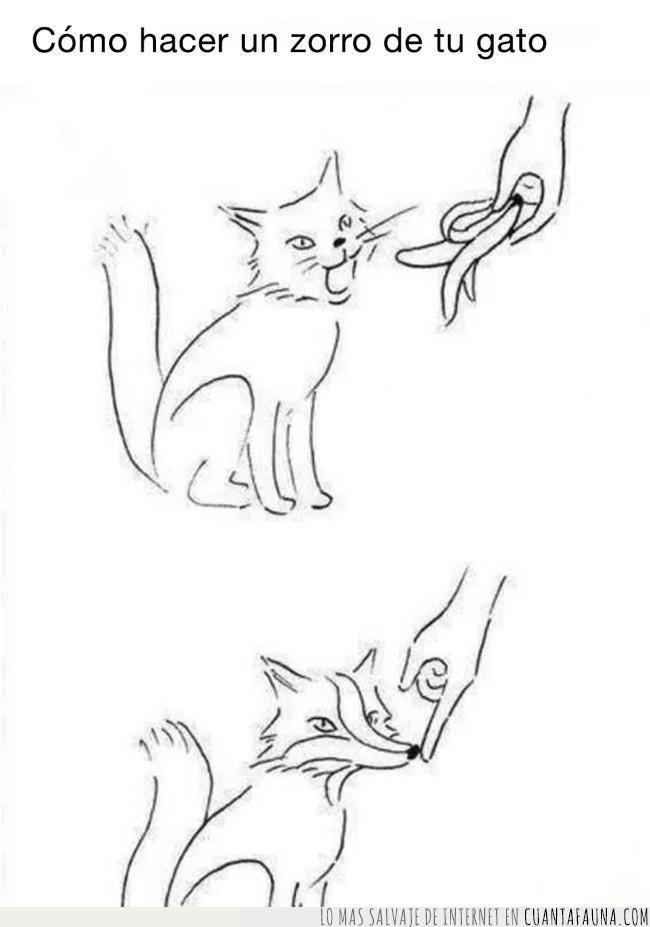 forma,gato,magia,manera,morro,plátano,transformación,truco,zorro