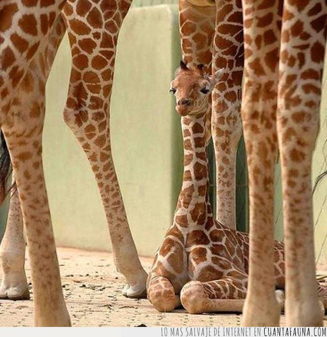 bebé,faltar,imagen,jirafa,llenar,mundo,necesitar,timeline
