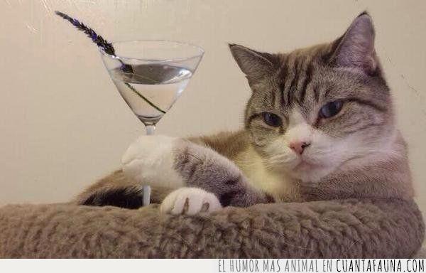 bar,copa,gato,hablar,martini
