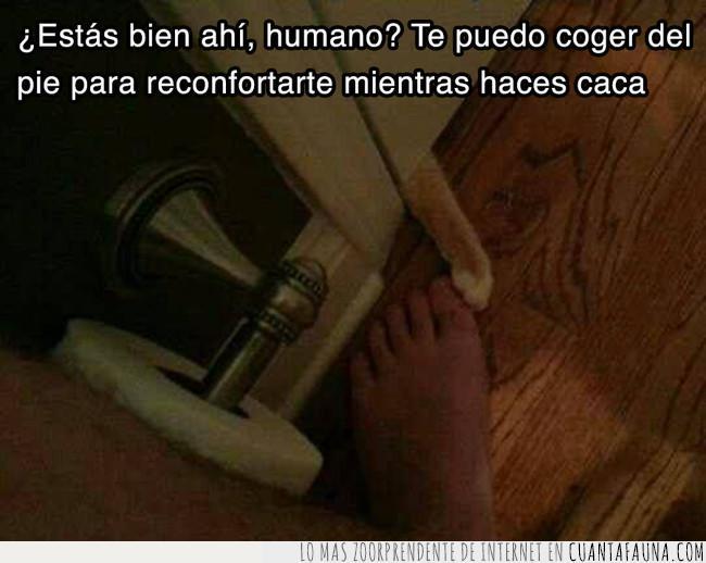 caca,coger,dar,dueño,gato,humano,lavabo,pata,pies,puerta,reconfortar,suelo