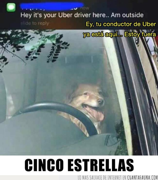 cinco estrellas,conducir,conductor,perro,uber