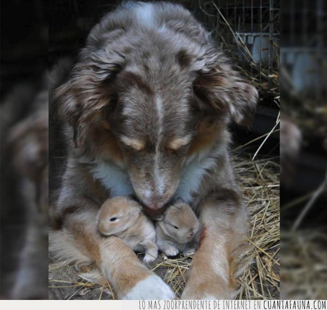 amor,conejos,crías,grande,madre,padre,perro