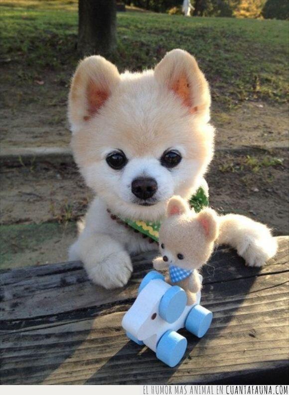 juguete,madera,mesa,miniatura,miniyo,pequeño,perro